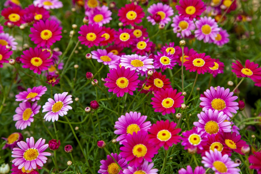 pink and red flower field