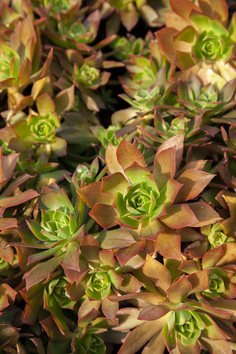 green and brown succulent plant