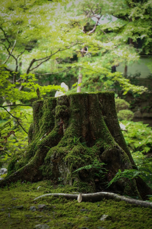 tree trun