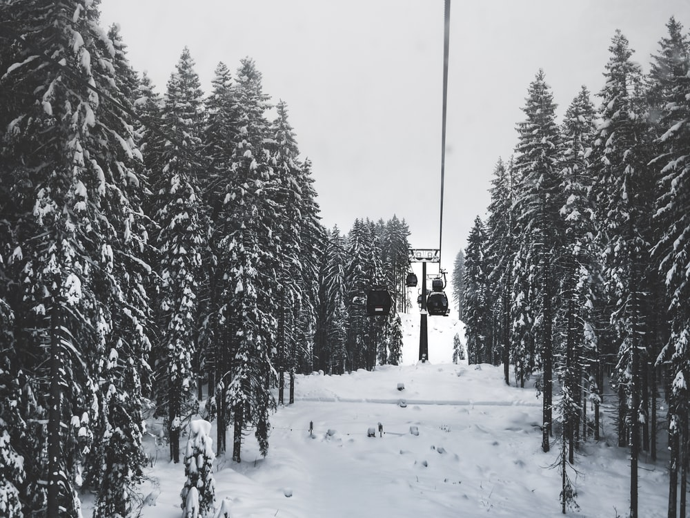 cable cars over snow covered grounds passing through trees under white skies