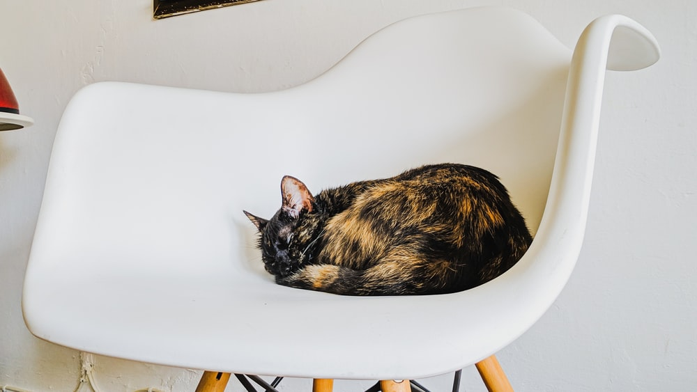 tortoiseshell cat on chair
