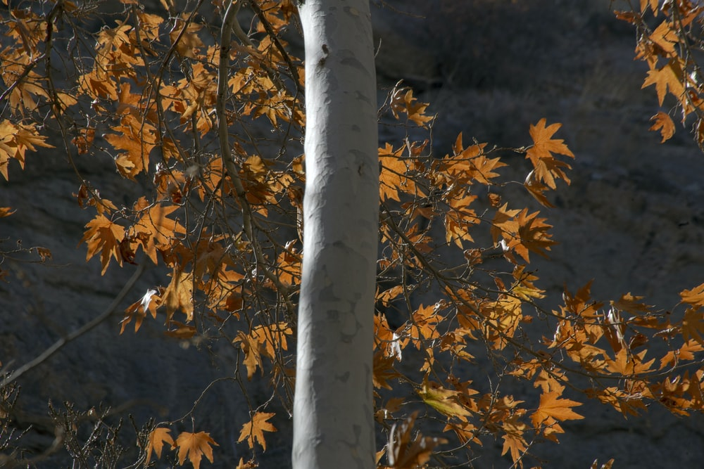 orange leafed tree at daytime