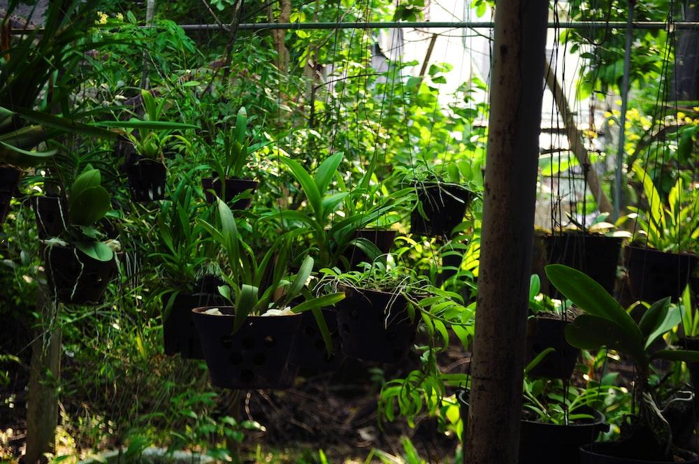 green leaf plants in garden