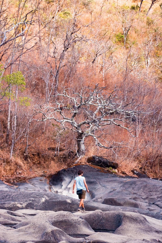 man walking near bare tree at daytime