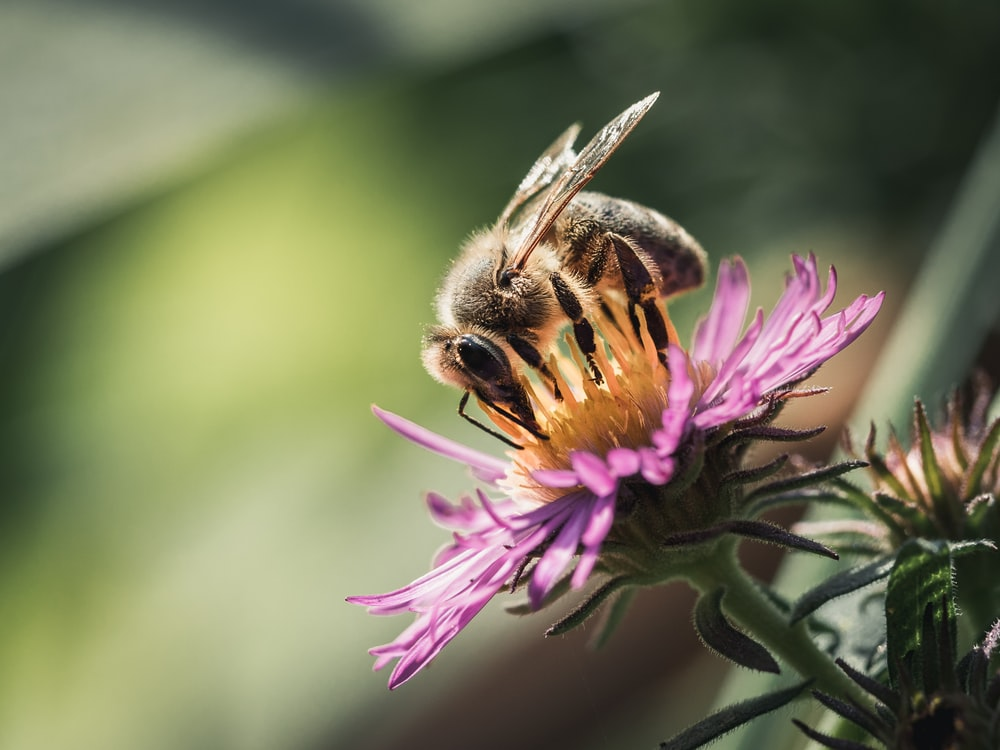 selective focus photography of brown bee