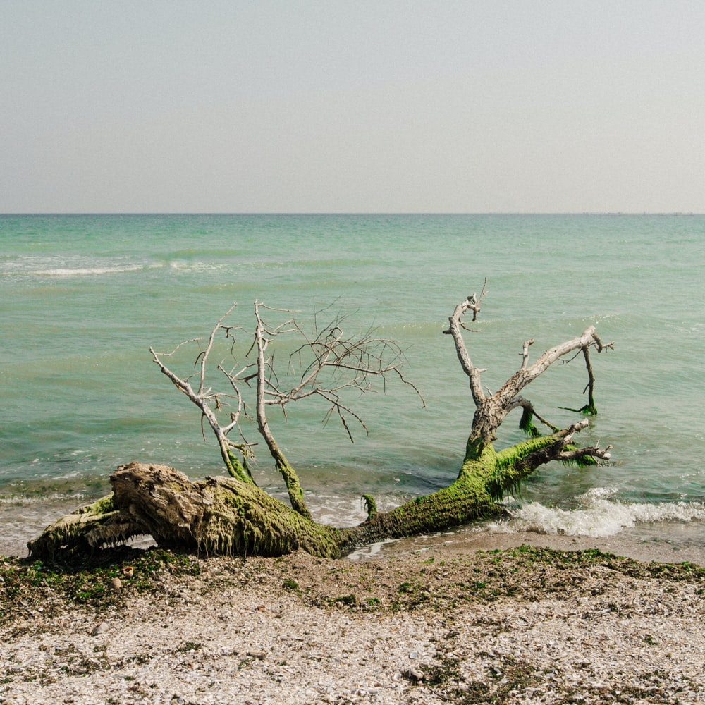 cut tree on shore during daytime