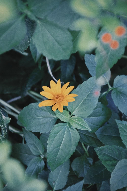 yellow petaled flower during daytime
