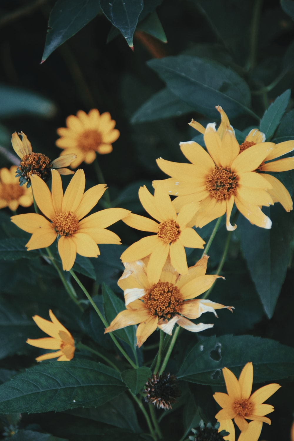 yellow petaled flowers during daytime photo