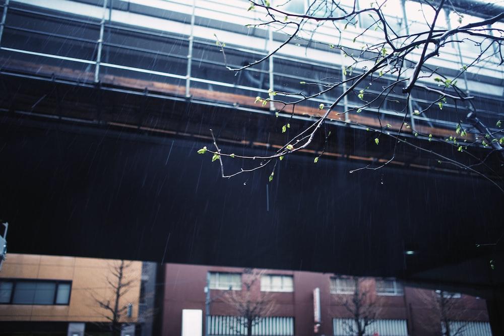 leafless tree near building