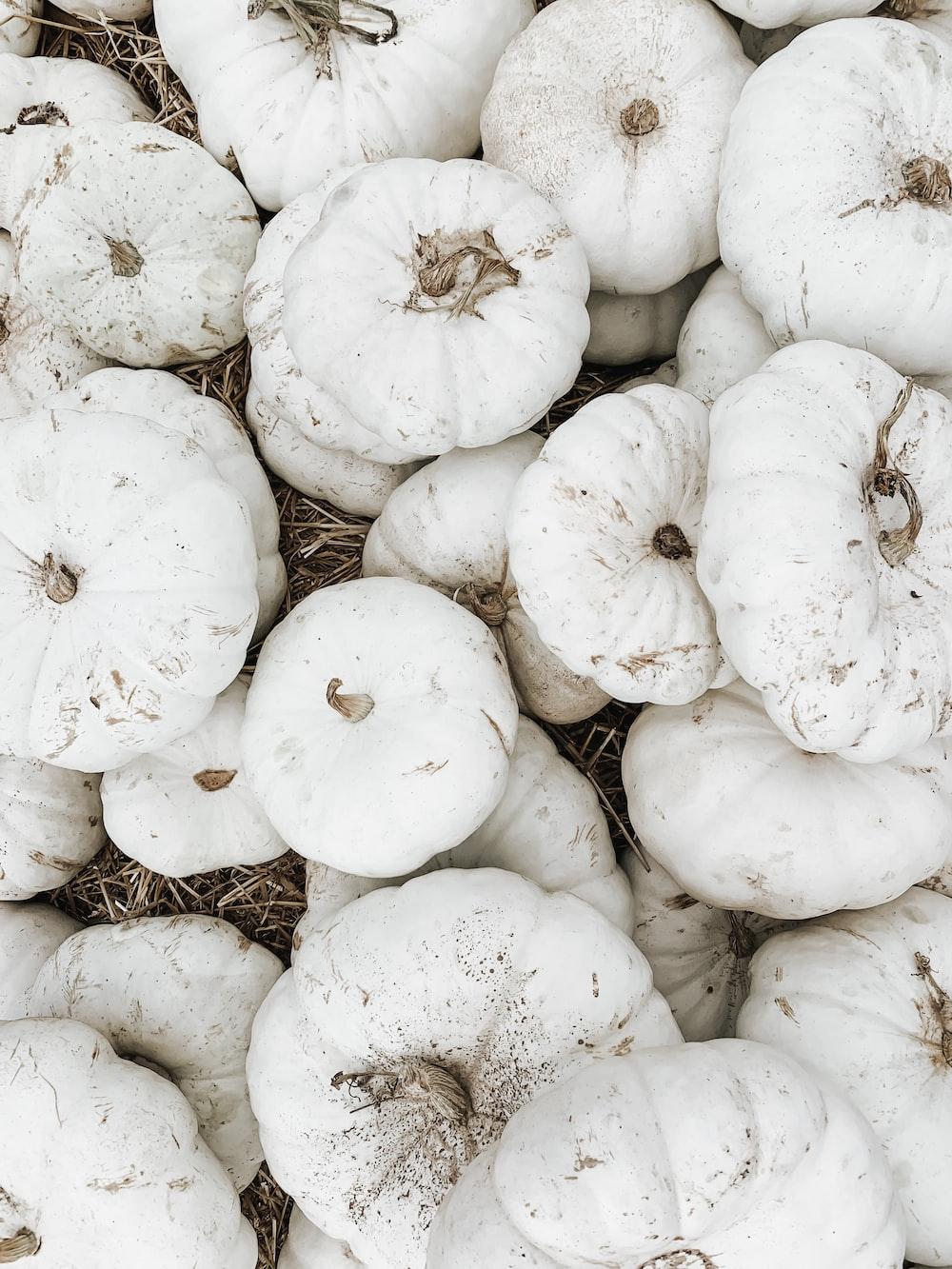 pile of white squash vegetables