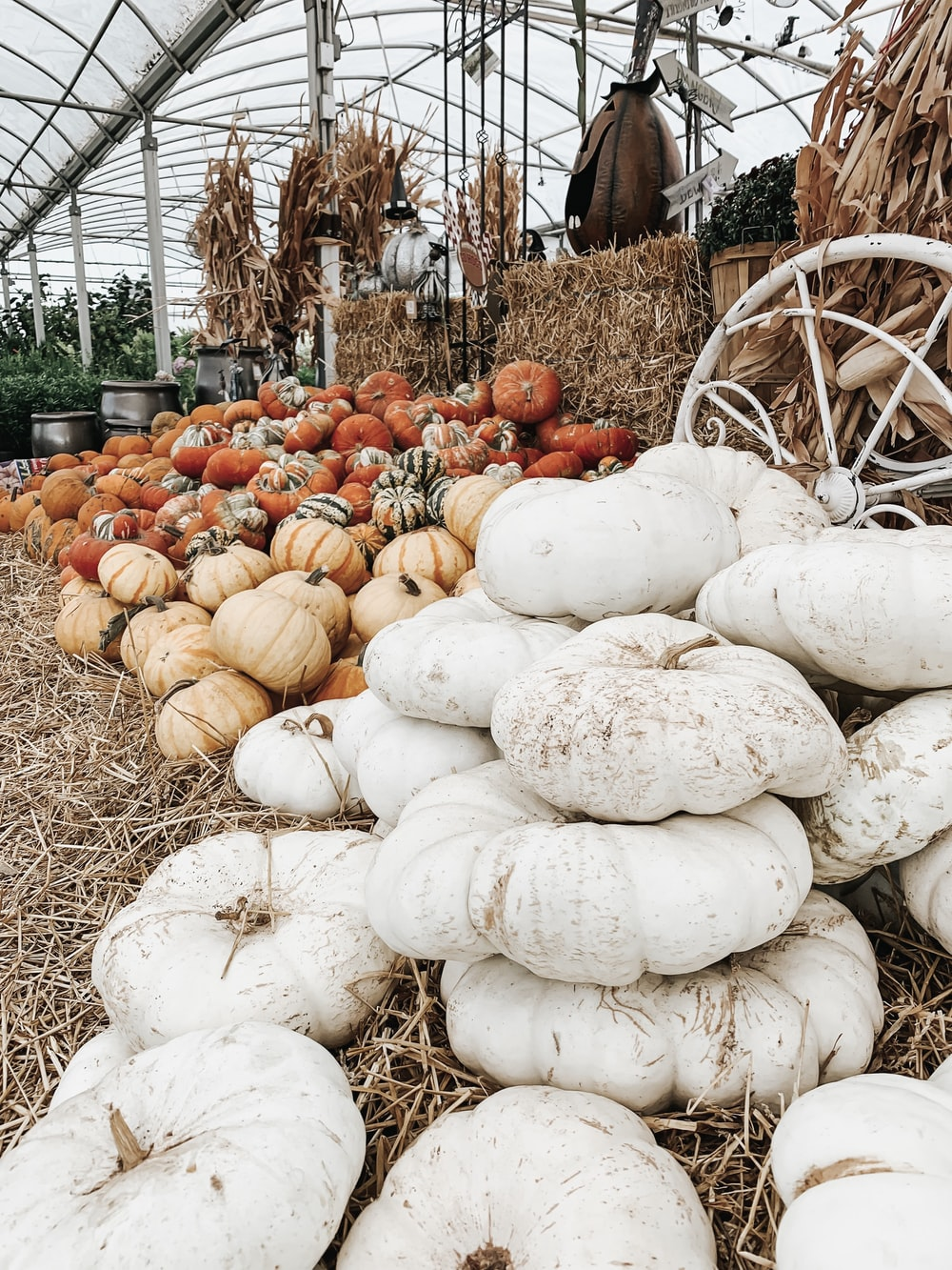 piles of pumpkins with different color