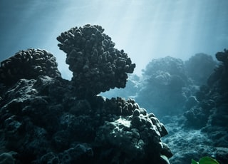 under water photography of corals