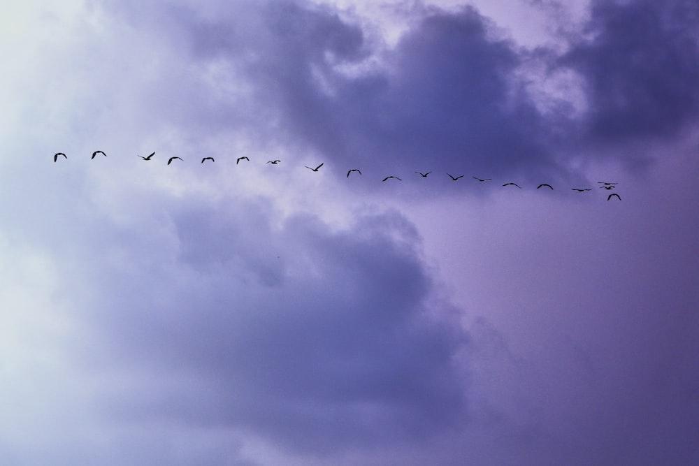 flying lined birds