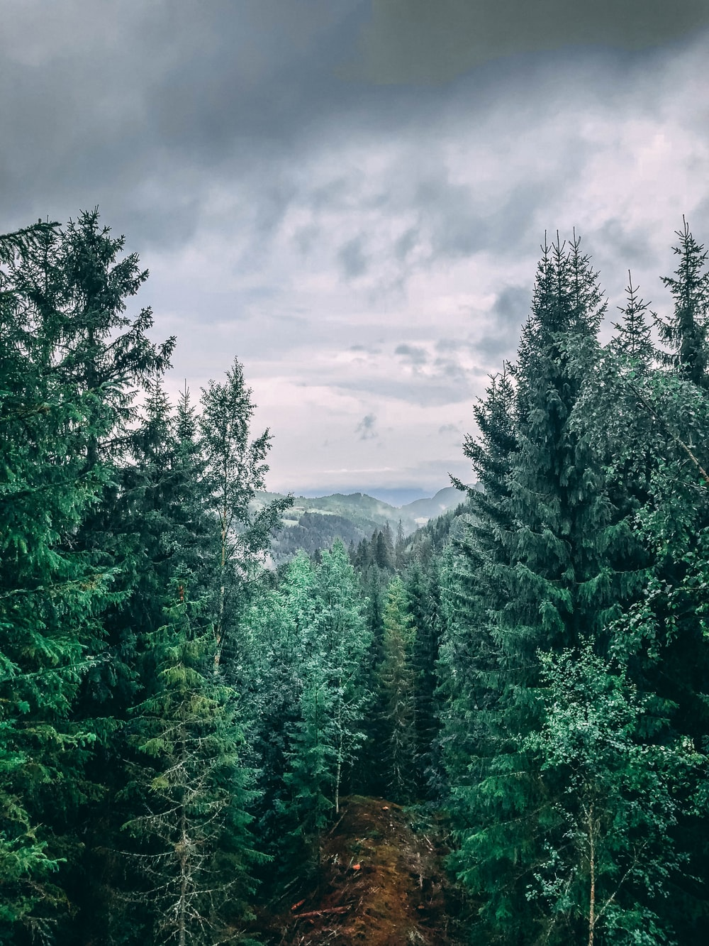 green trees under cloudy sky