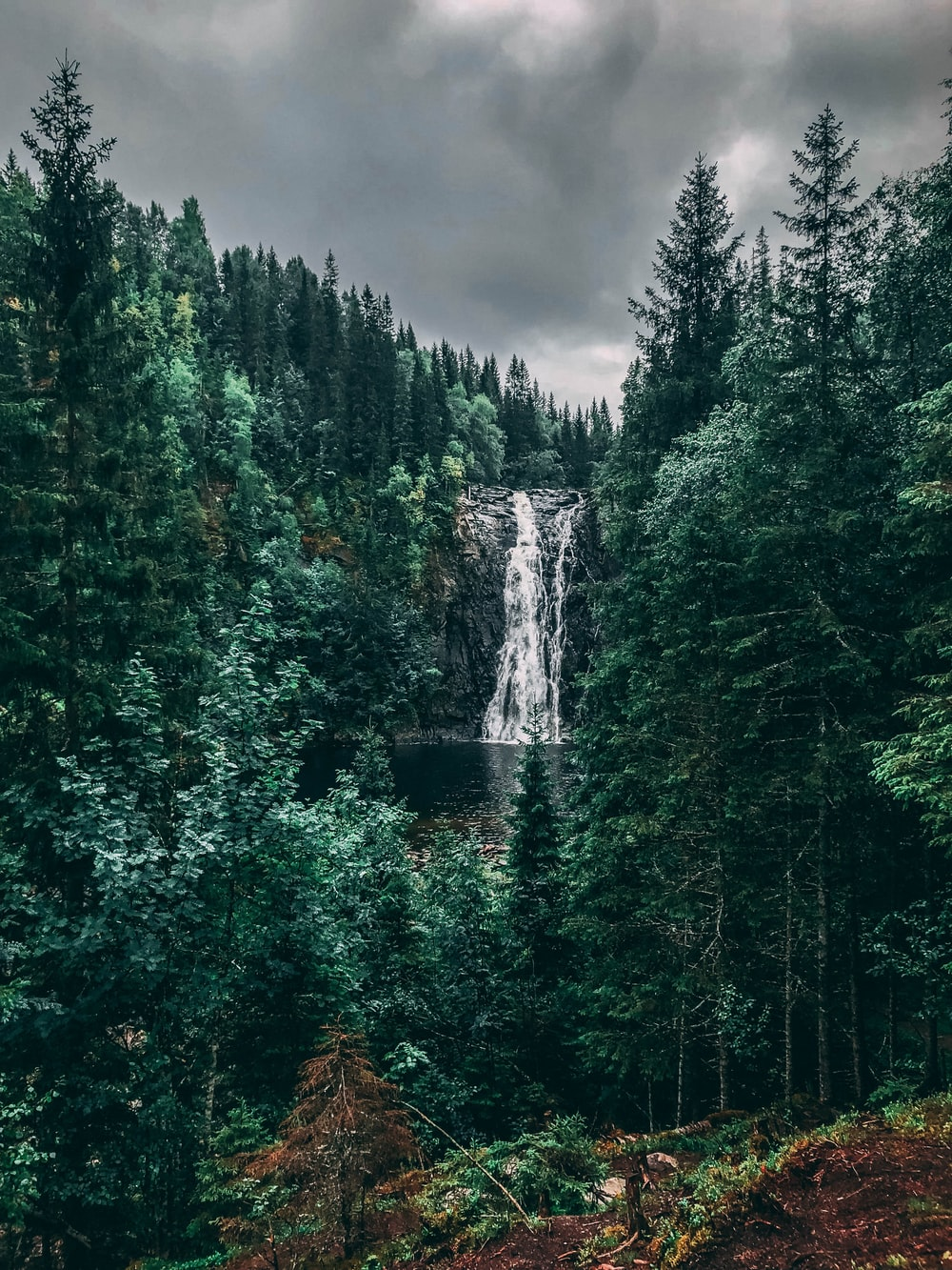 waterfalls between trees