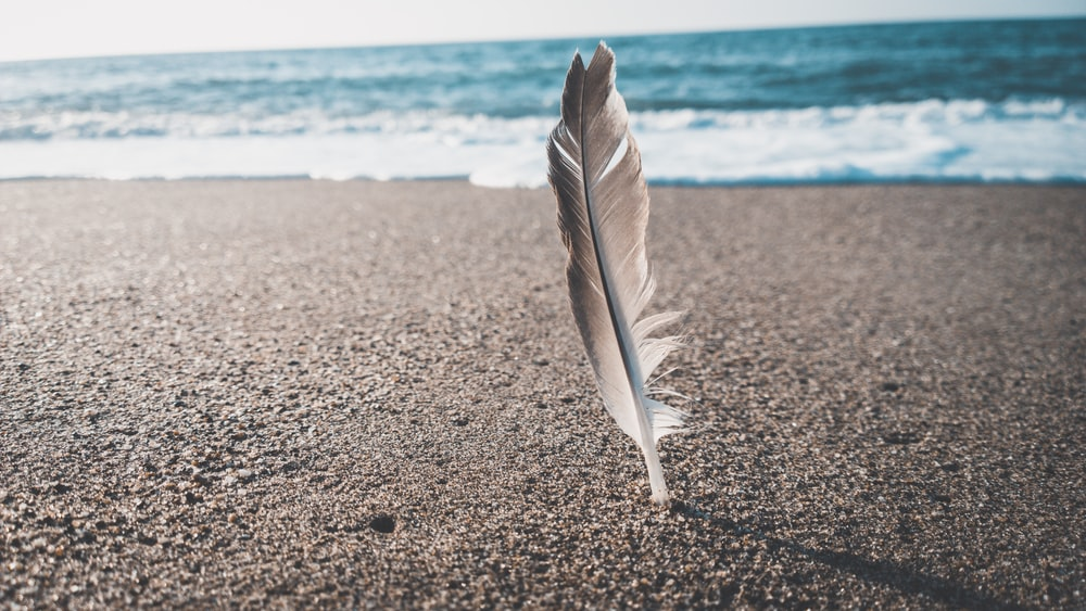 brown and gray feather near seashore