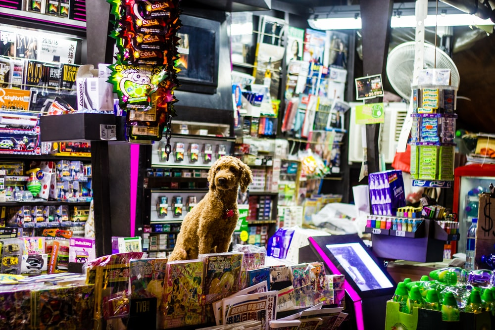 dog sitting on counter