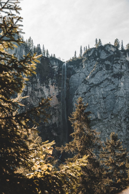 trees near stone
