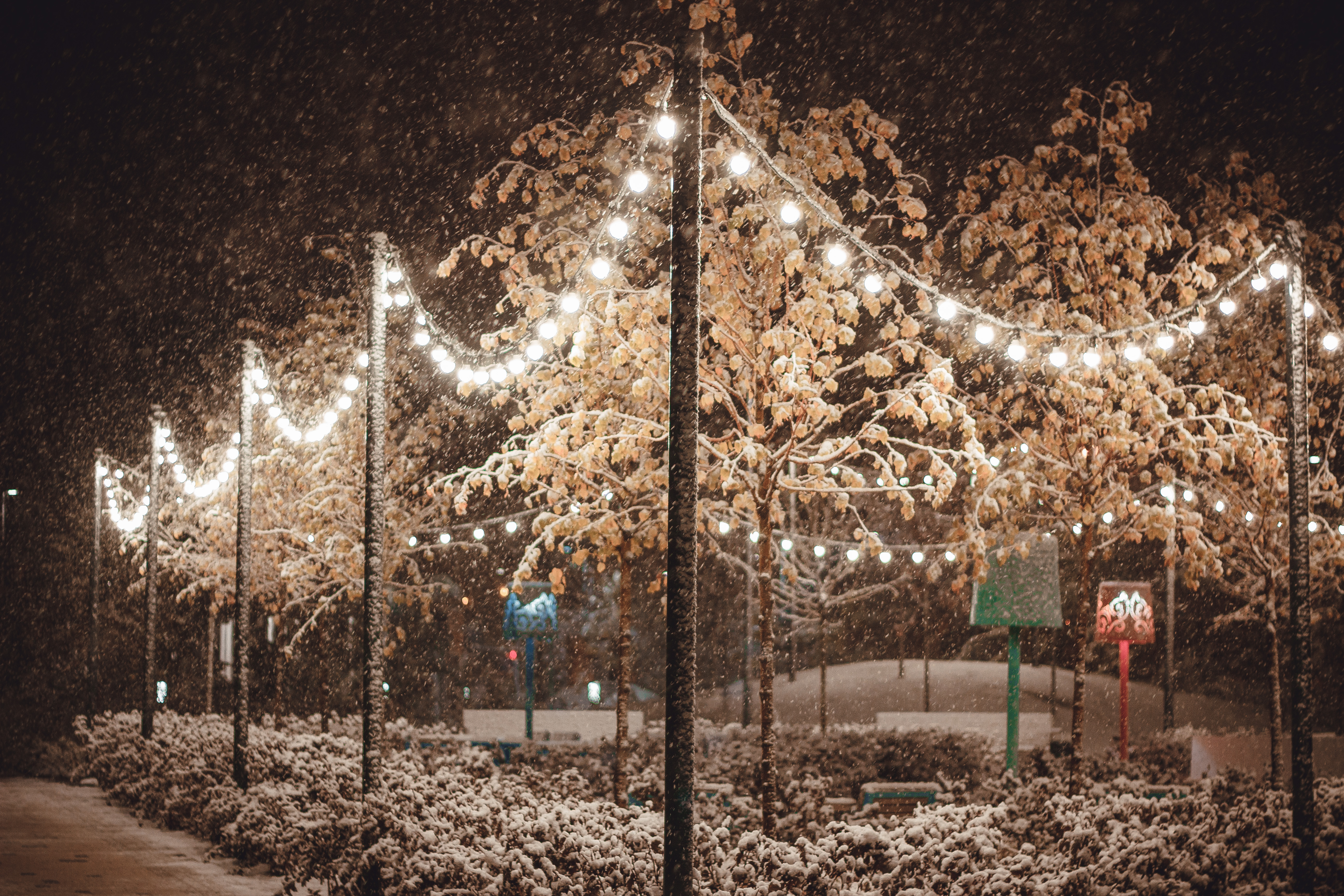 trees between lights