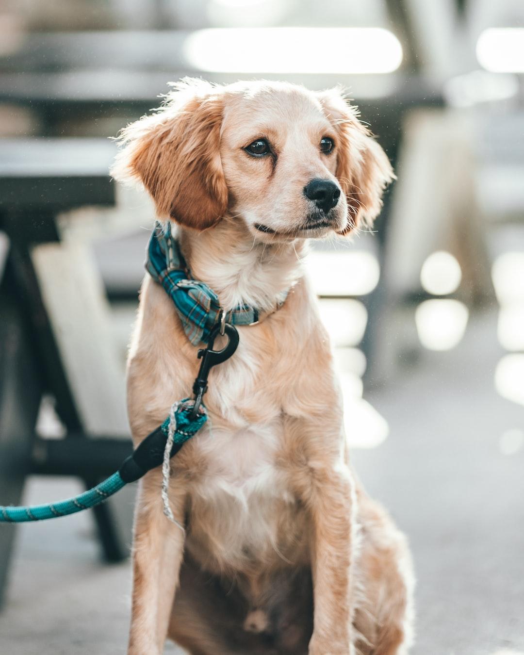 Las mejores razas de perro para tener en casa