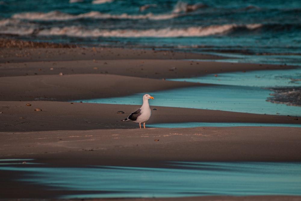white and black bird standing beside body of water