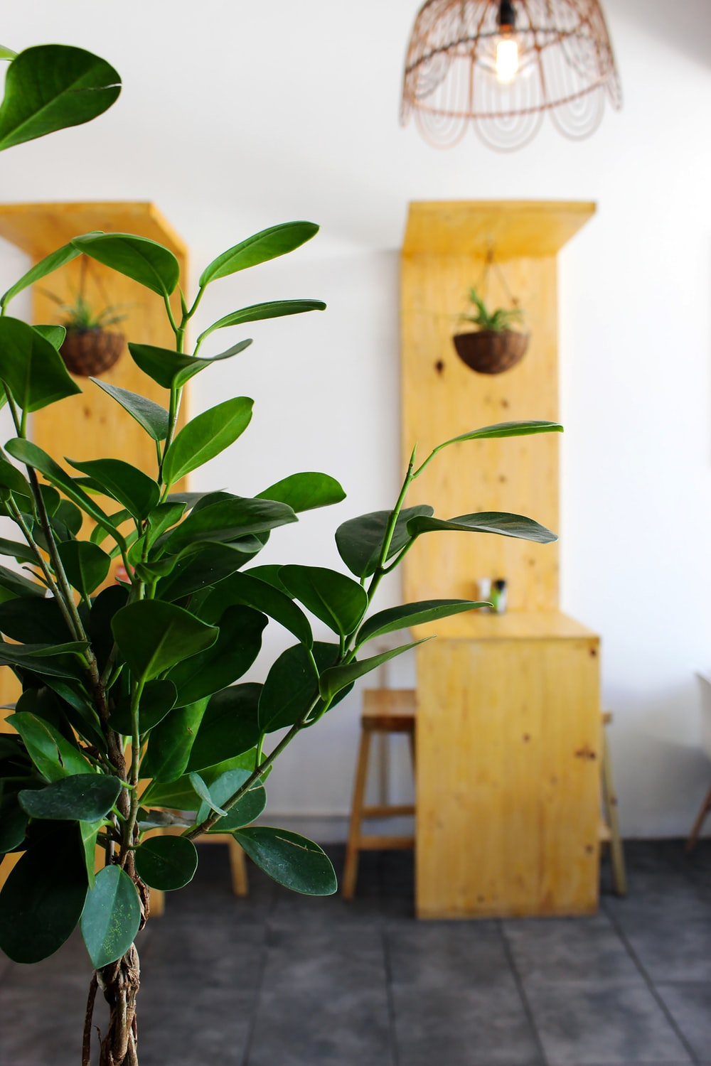 green indoor potted plant near table and chairs