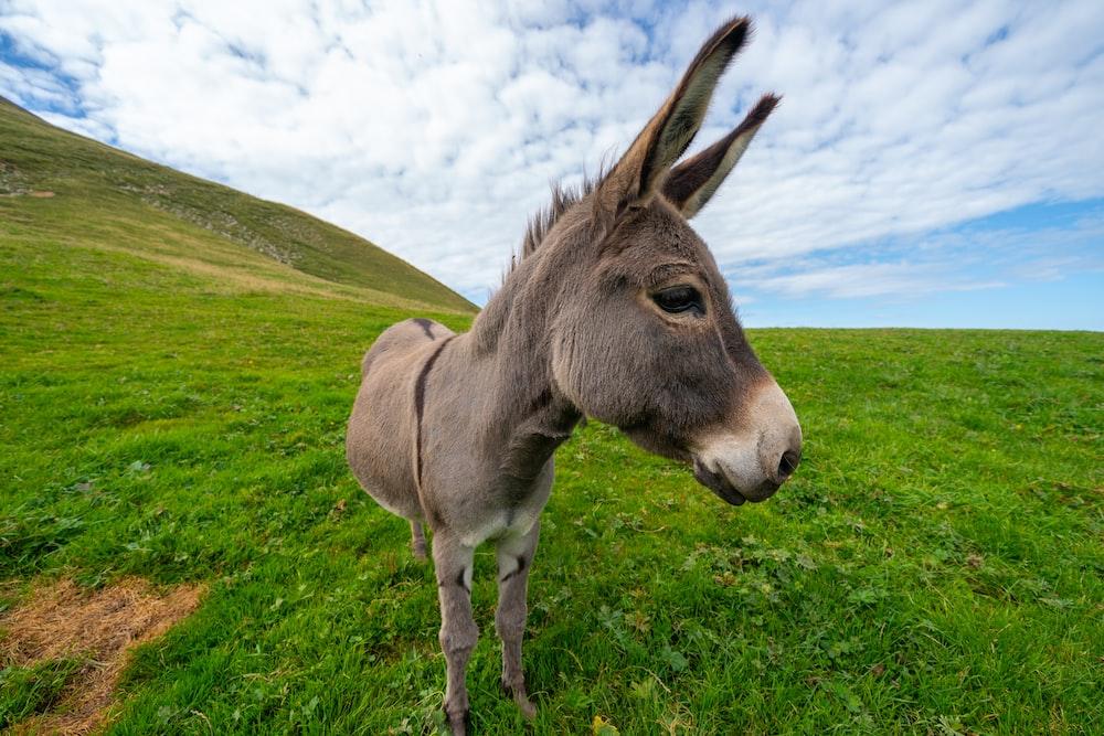 donkey on hill