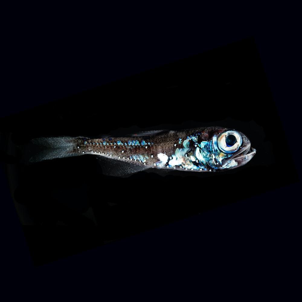 closeup photo of fish