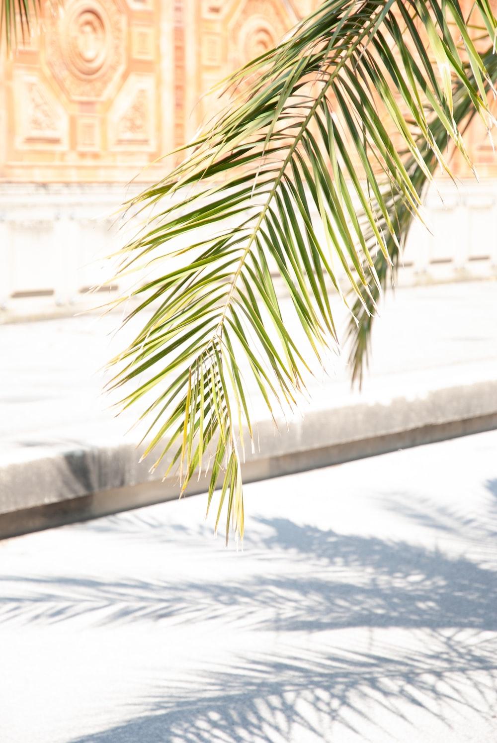 green palm leaves near pavement