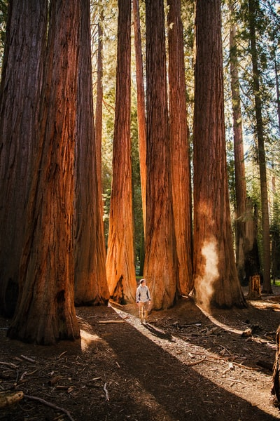 The Big Trip | Walking Among Giants in Sequoia National Park - Explore more at explorehuper.com/the-big-trip
