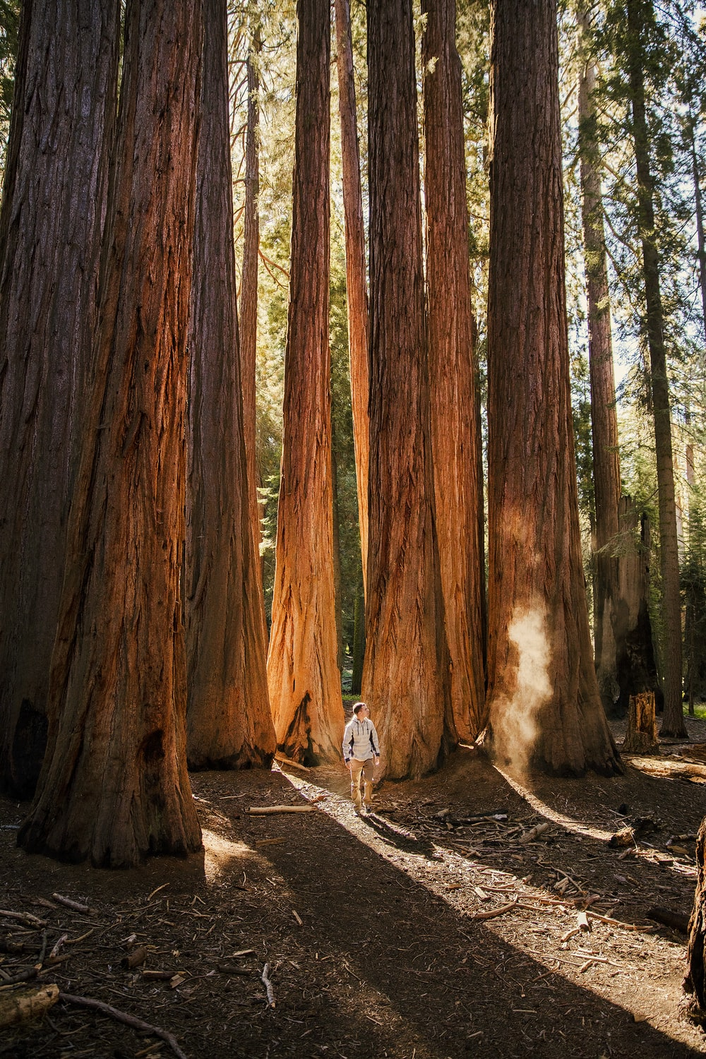 man standing beside tall brown trees