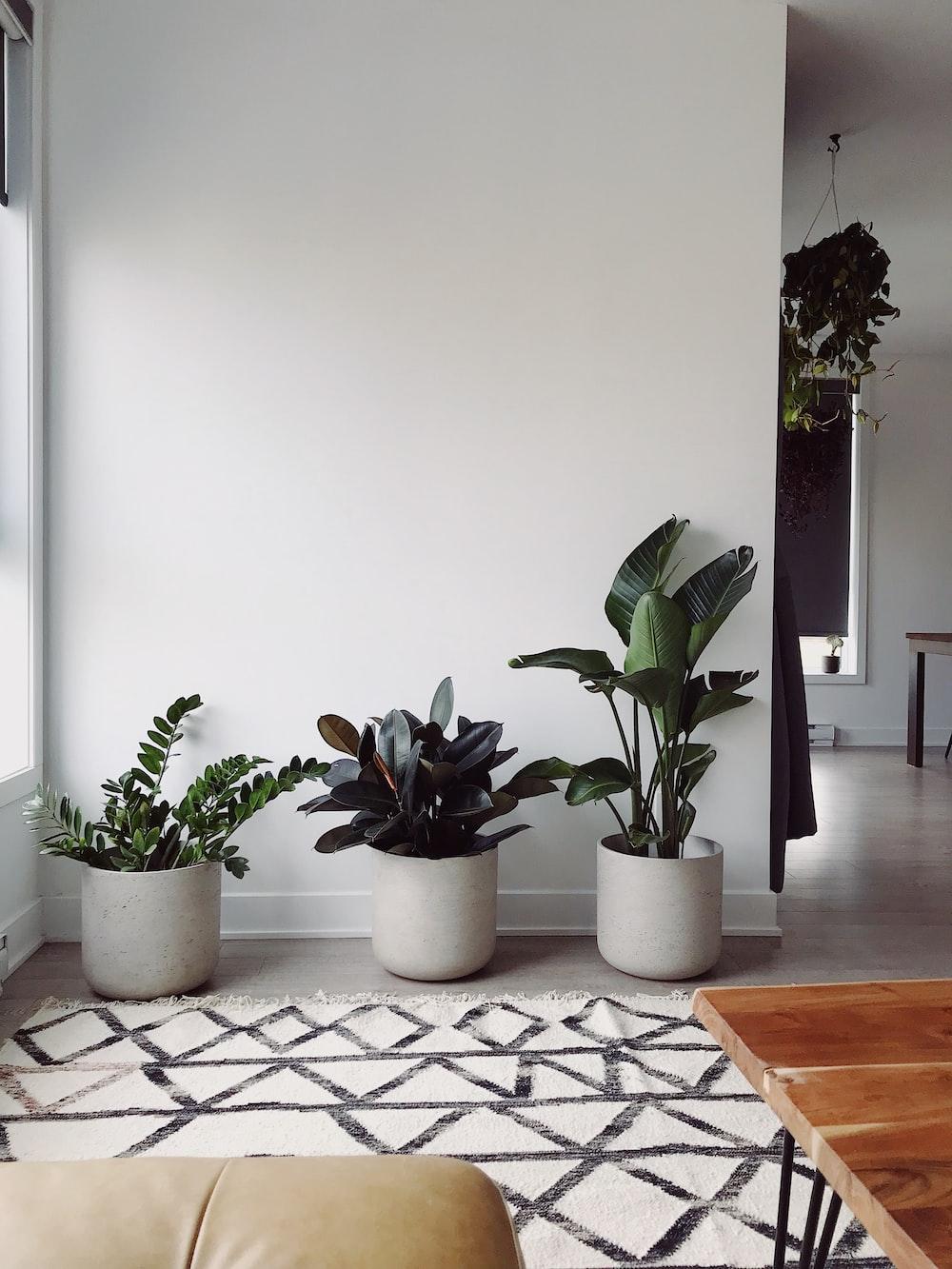 three green-leafed plants