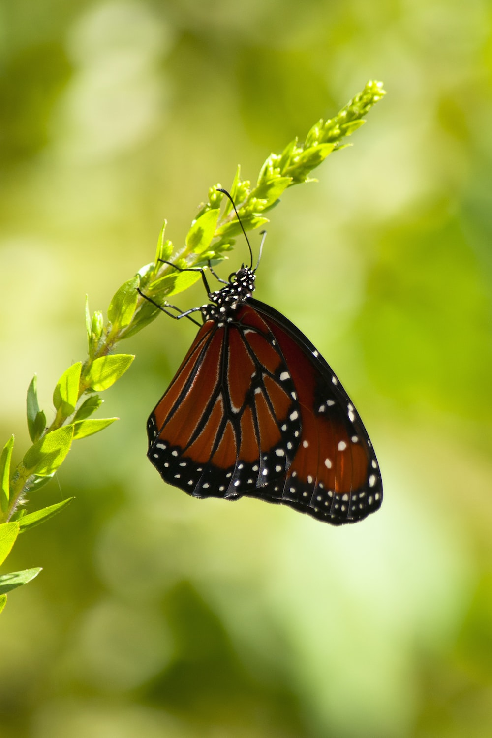 red and black butterfly on plant