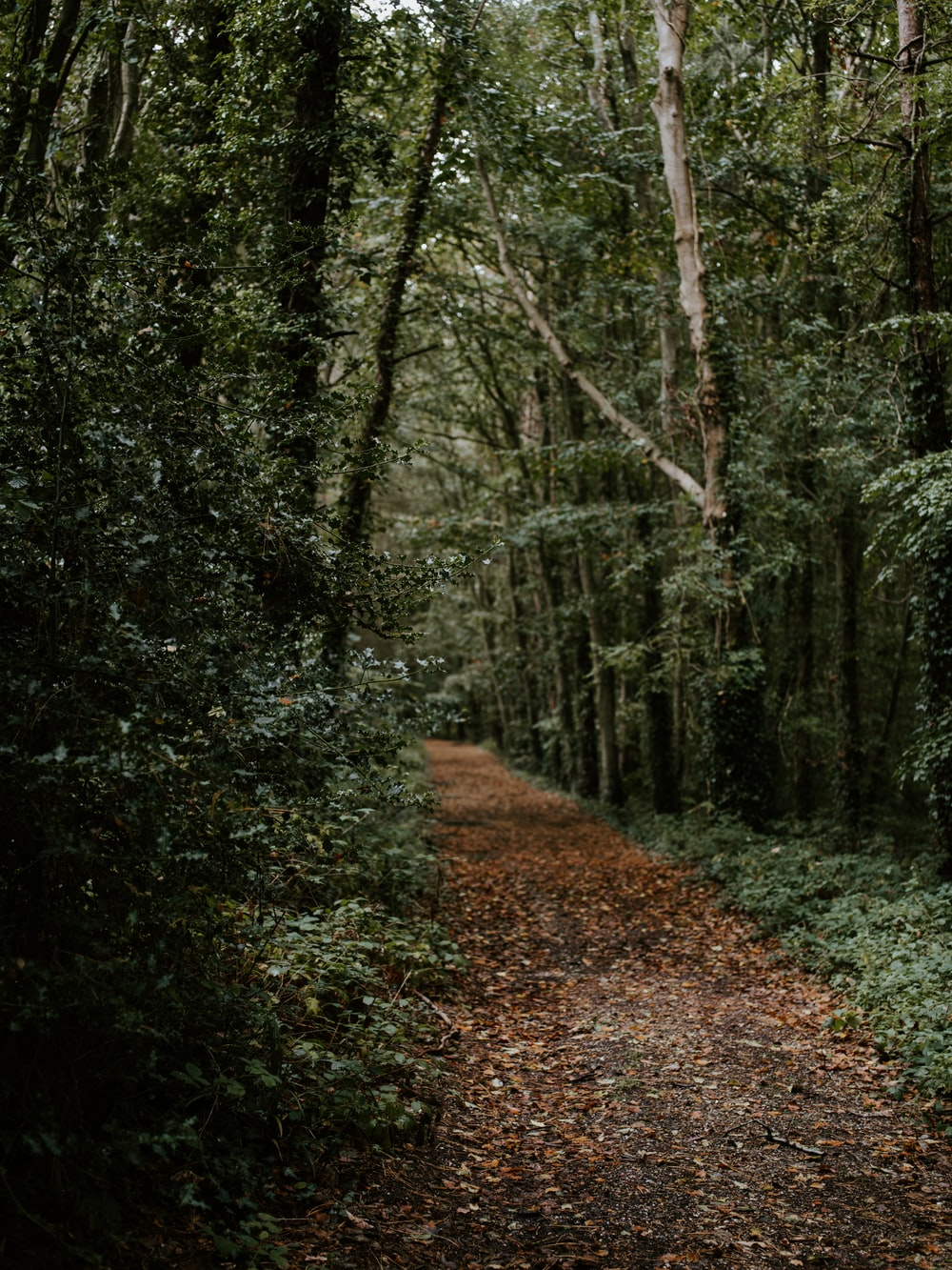 brown footpath in forest