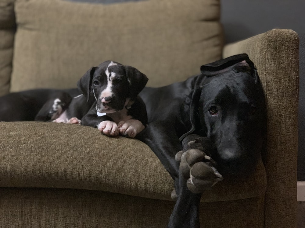dog and puppy on sofa