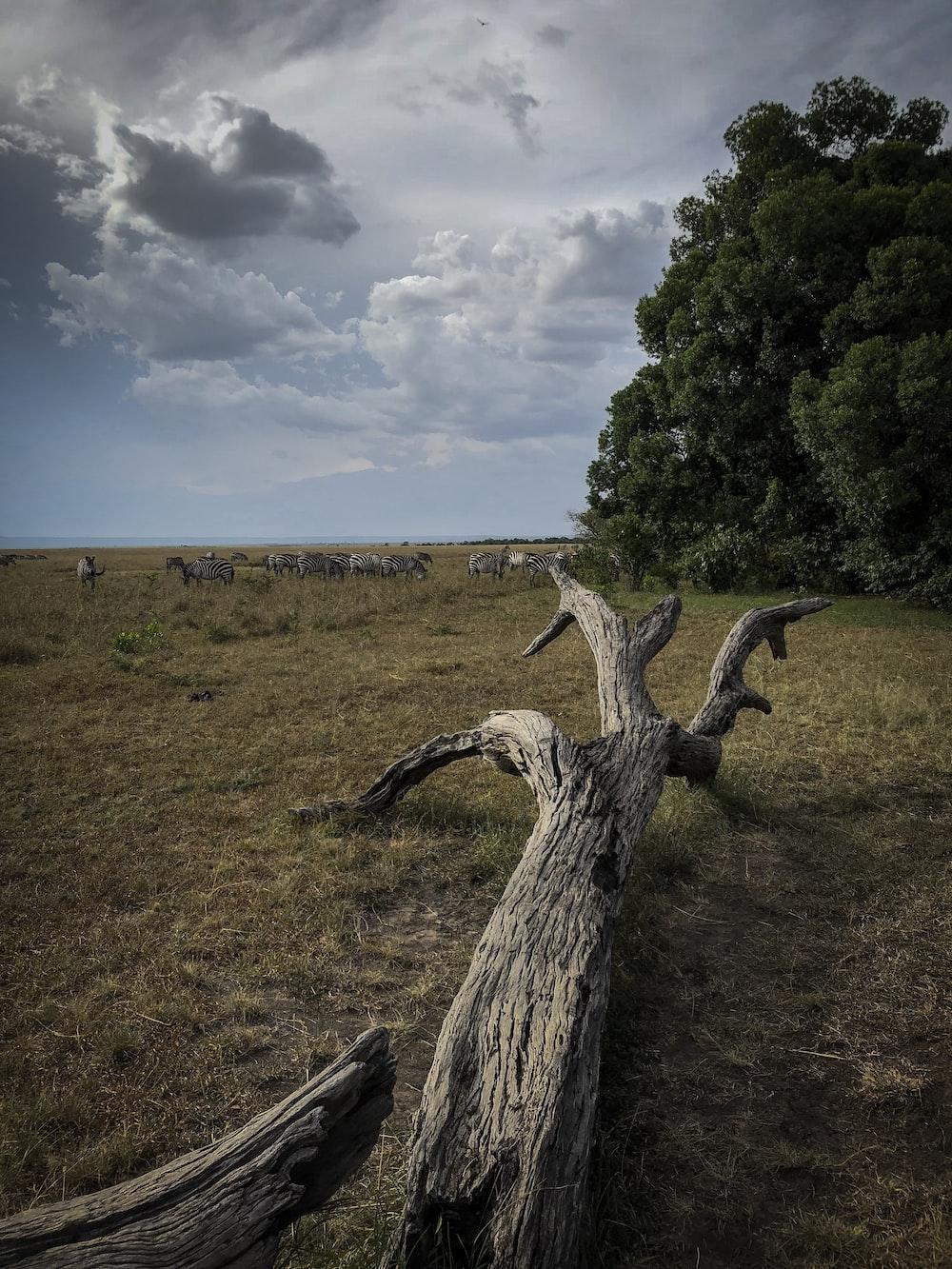 driftwood on grass