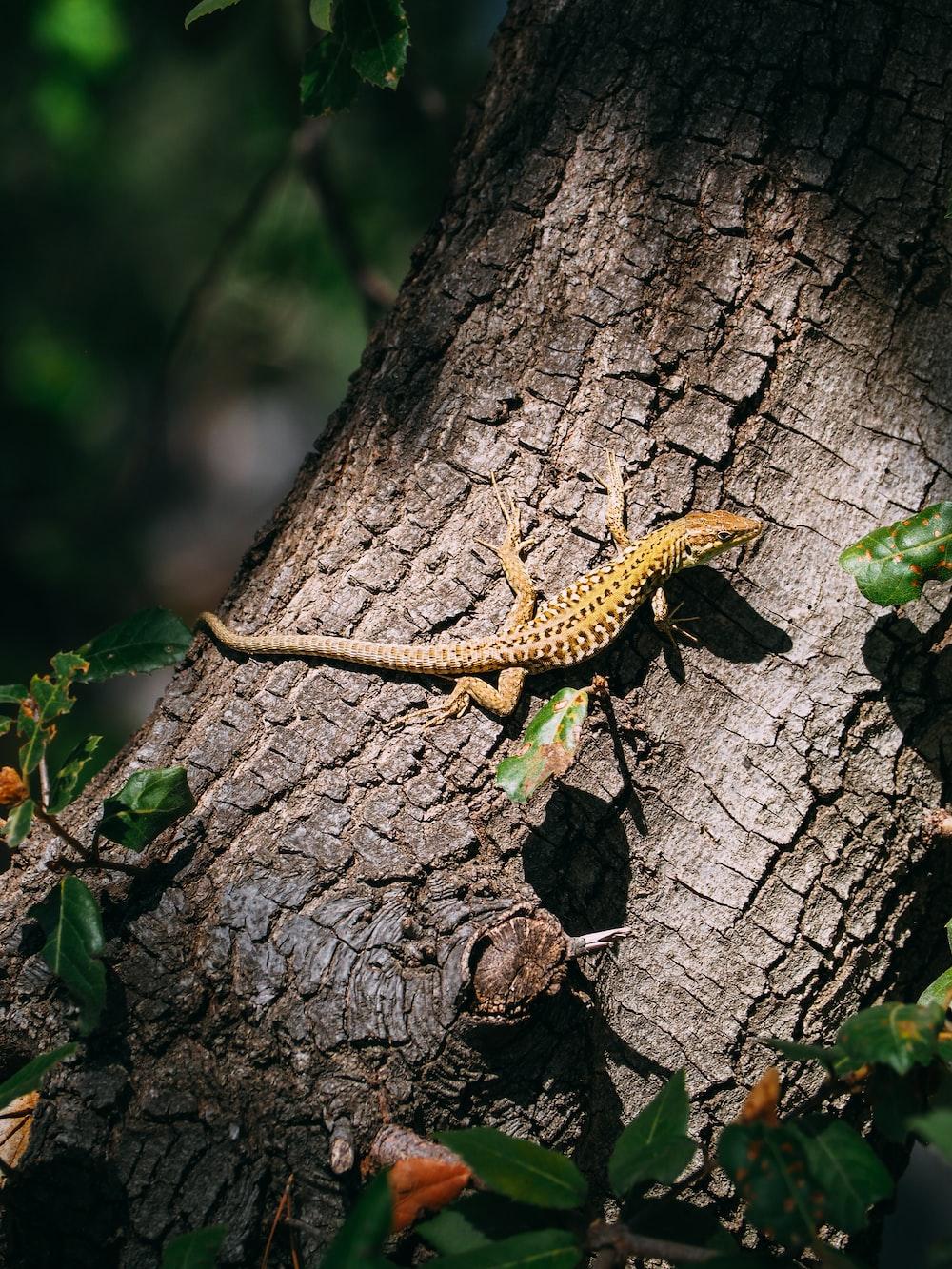 brown lizard climbing on tree