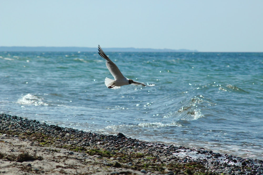 bird flying on seaside