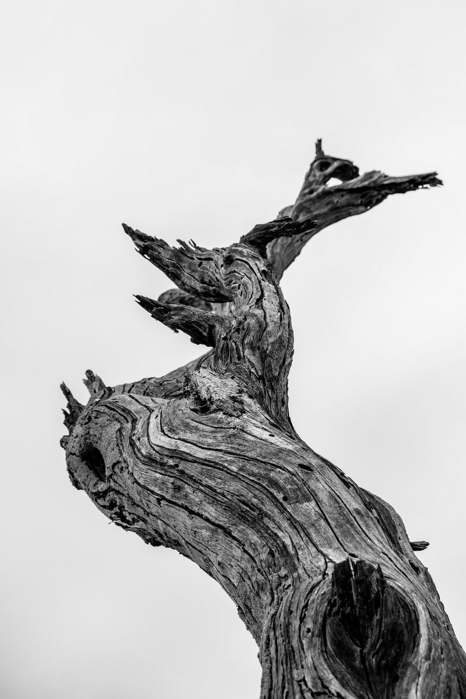 bare tree illustration