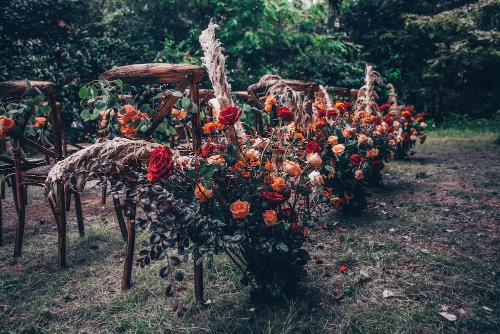 multicolored cluster petaled flowers