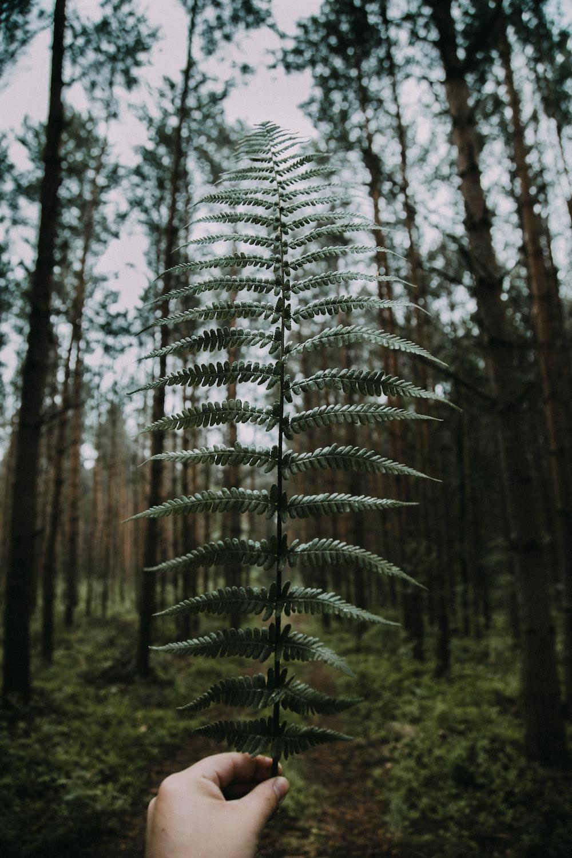 yellow fern leaves