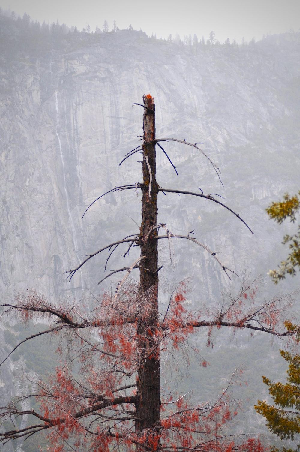gray bare tree during daytime photo