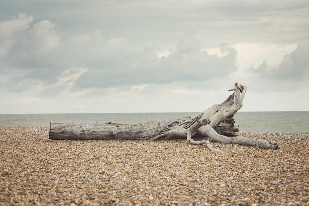brown log on seashore