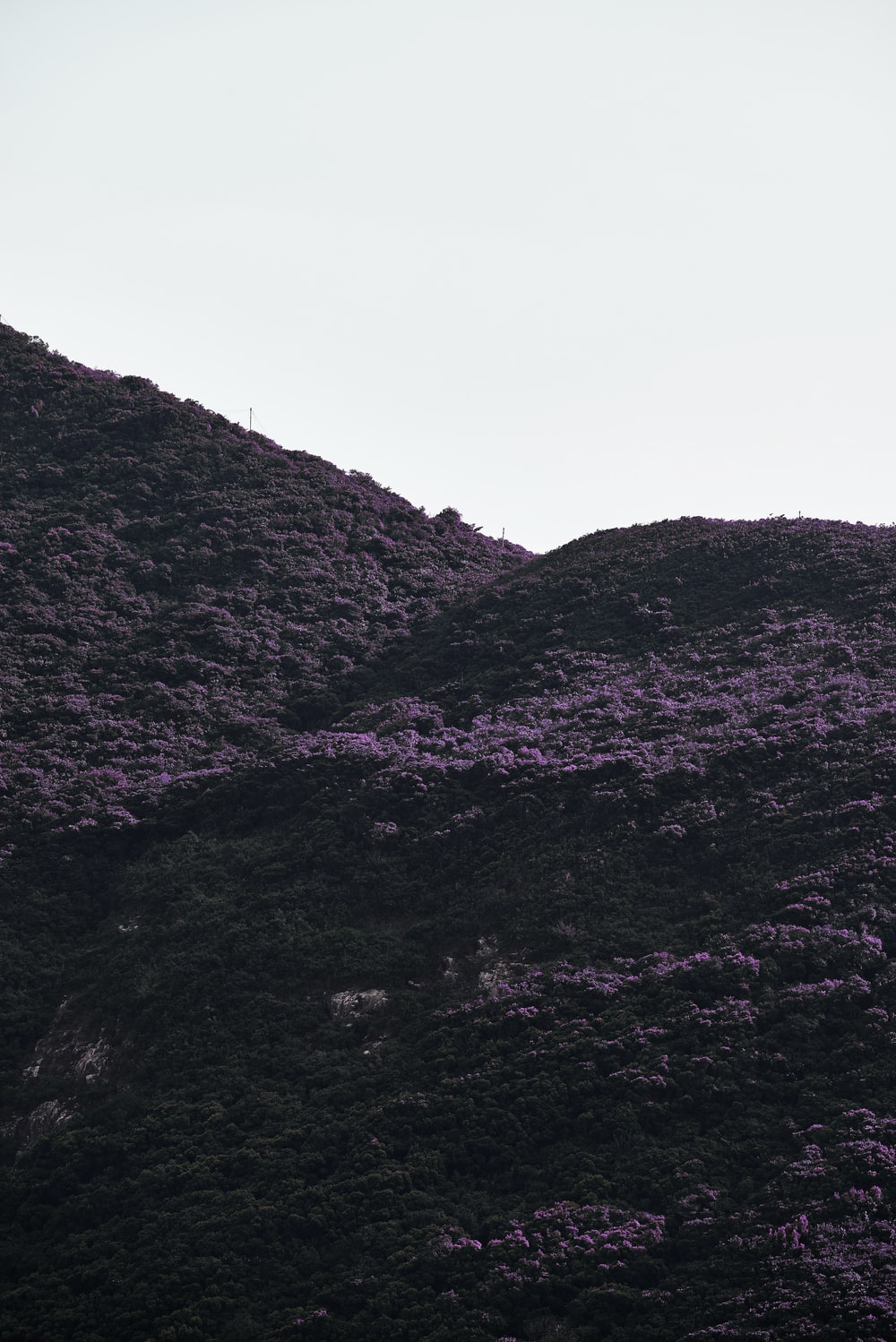 low-angle photography of purple flowers in the mountain