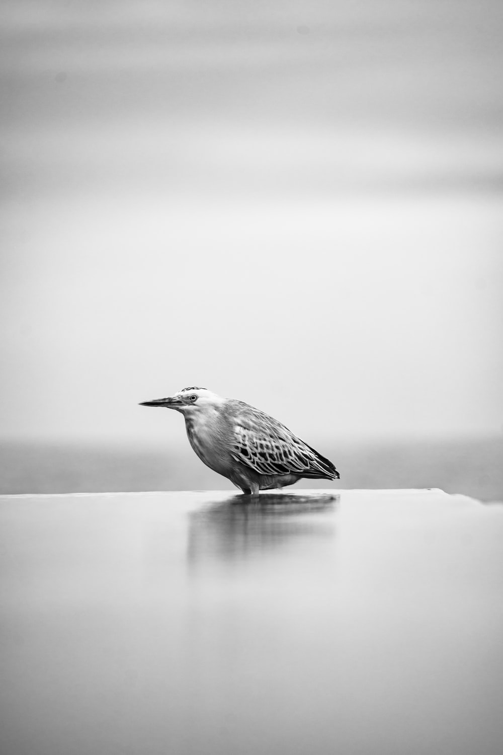 greyscale photography of bird