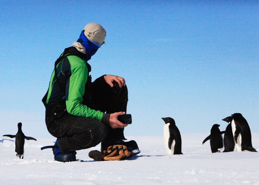 Look guys, See, I told you, he's a giant! The perspective of the  Adélie penguin up against a human.