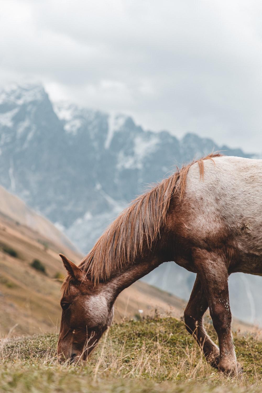 brown horse on grassland photo