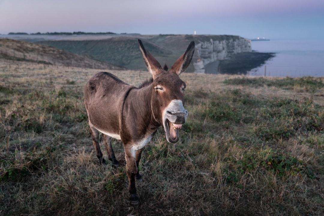 Donkey at the cliffs of Etretat, France.