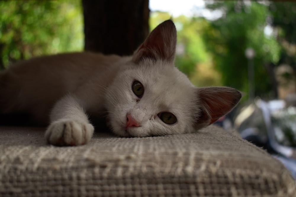 cat lying on gray textile