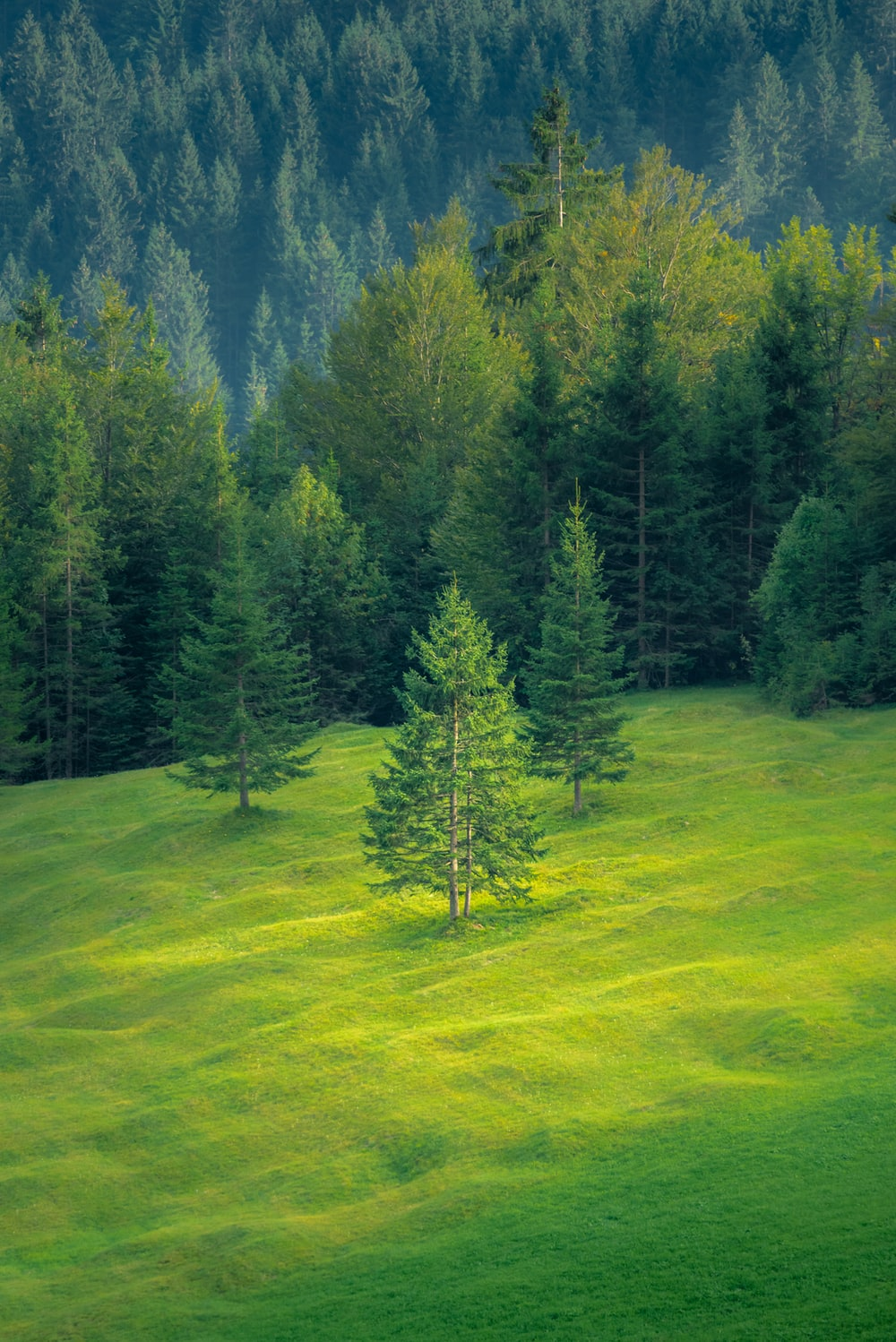 green trees and grasses
